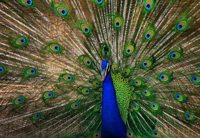 Life in Color David Attenborough